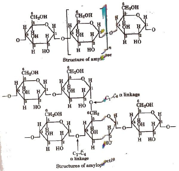 CLASSNOTES: Class 12 Chemistry Notes Biomolecules
