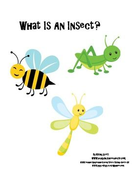What Is An Insect posters