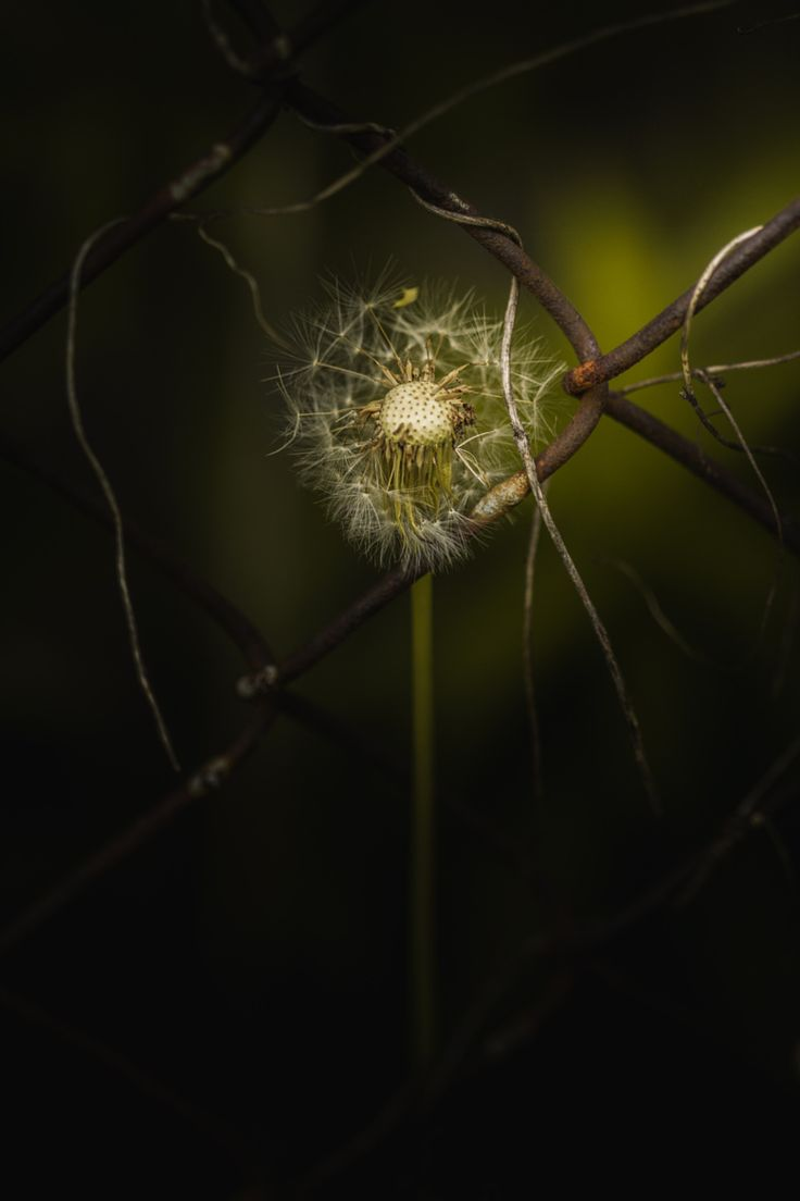 Photograph Break My Rusty Cage by Paul Barson on 500px