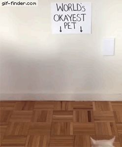 World's Okayest Pet | Gif Finder – Find and Share funny animated gifs