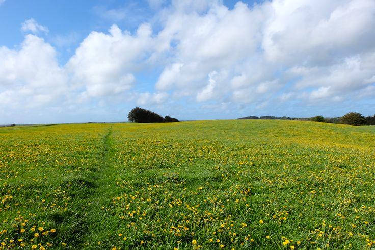 #denmark #danmark #scandinavia #beautiful #wildflowers #countryside #nature #spring #explore #wanderlust #adventure