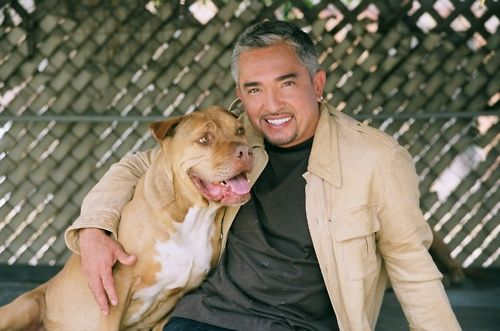 """My kids are around Pit Bulls every day. In the '70s they blamed Dobermans, in the '80s they blamed German Shepherds, in the '90s they blamed Rottweilers. Now they blame the Pit Bull. When will they blame the humans?""    — Cesar Millan"