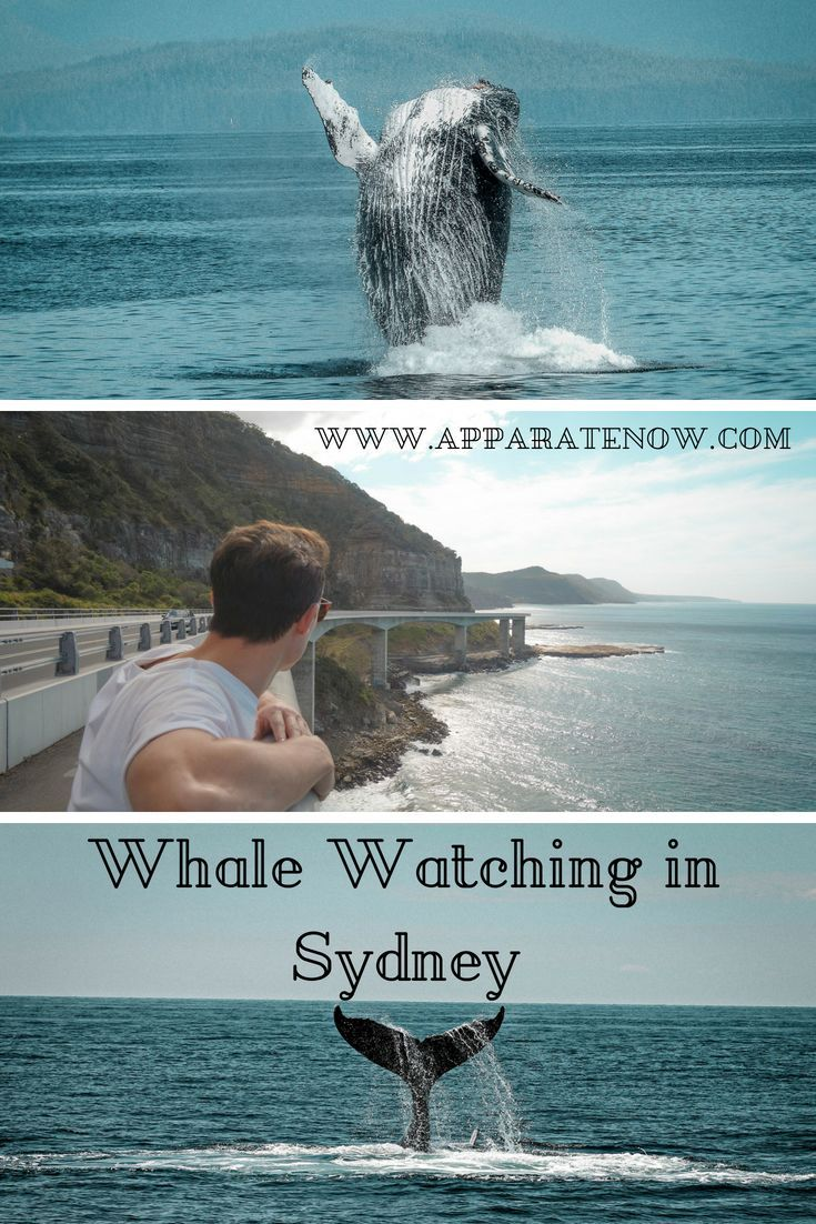 The Ultimate Guide To Whale Watching In Sydney Whale Watching