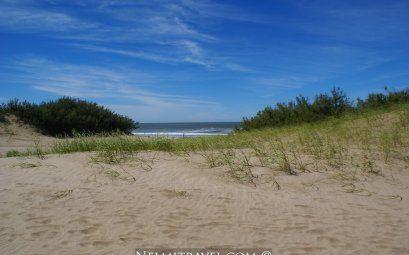 Experience the magic of Carilo. #travel #argentina #nelmitravel #carilo #coast #nature #forest #beach #holidays