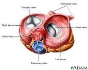 artificial heart valves - Google Search