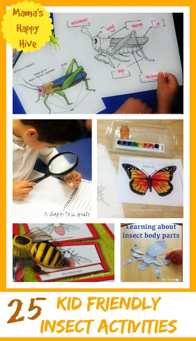A collection of kid friendly insect activities with life cycles, free printables, specific activities for grasshoppers, butterflies, ladybugs, honey bees, and ants! - www.mamashappyhive.com