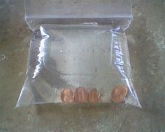 For FLIES: Keep Pennies In A Bag Filled With Water On Her Back Porch For The ENTIRE Summer! Good To Know!