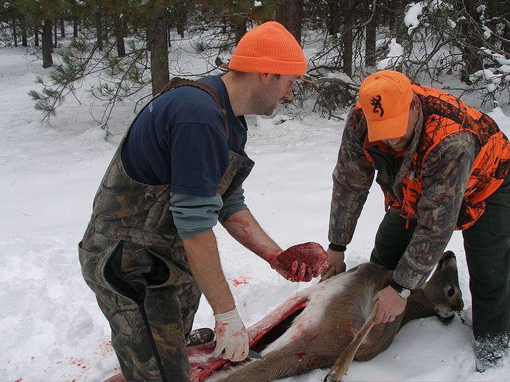 How to field dress a deer.
