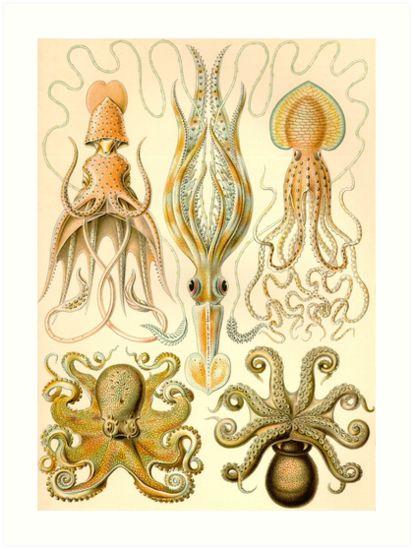 Gamochonia - Ernst Haeckel by billythekidtees