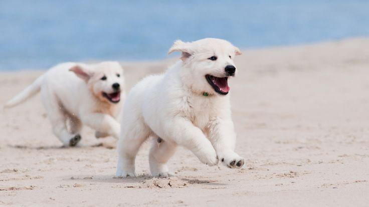 25 Best Ideas About Pompano Beach On Pinterest Florida