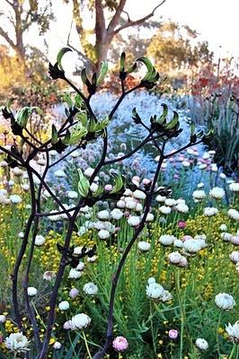 sepal and twig blog. Botanic Gardens , Perth WA