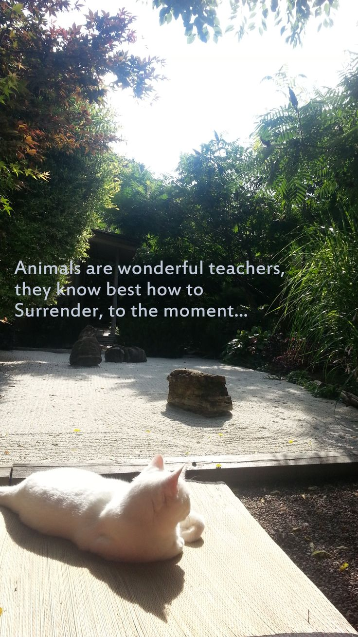 www.camelliateas.net The Camellia Teas cat, Heney-chan is a wonderful teacher... She teaches me to define my borders, to set limits. Animals each have their own message: listen with an open heart and there is so much to learn!