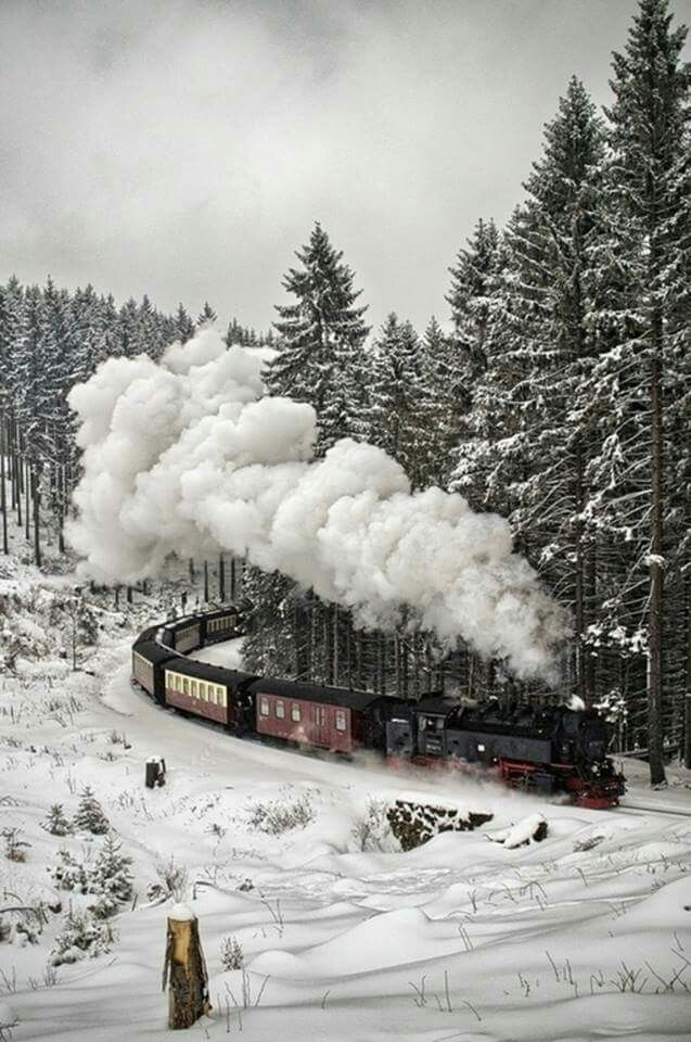 The Black Forrest,  Germany