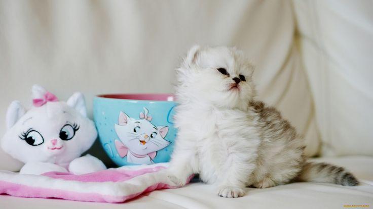 животные, коты, пушистый, малыш, чашка, игрушка, котёнок