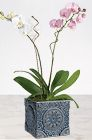 Singsong Pink Orchid Bouquet - Calyx Flowers