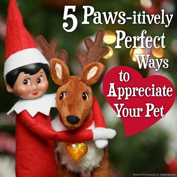 5 Ways to Spend National Dog Day | Fun ideas for how to appreciate your pet | The Elf on the Shelf | Cute Animals