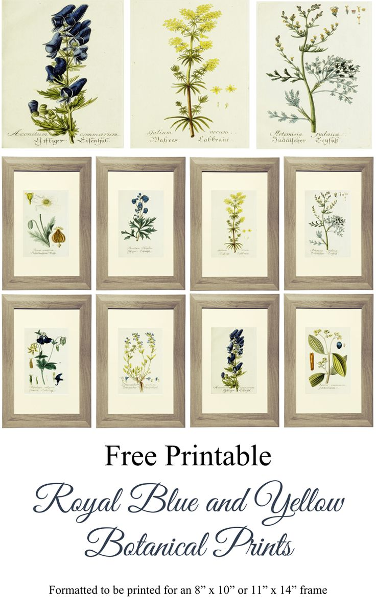 "Free Printable Royal Blue and Yellow Botanical Prints formatted to be printed for an 8""x10"" or 11""x14"" frame. www.simplymadebyrebecca.wordpress.com #LGLimitlessDesign & #Contest"