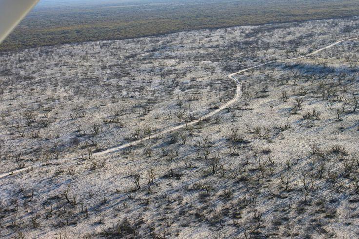 Bushfire burn along McCabes Track, Little Desert.