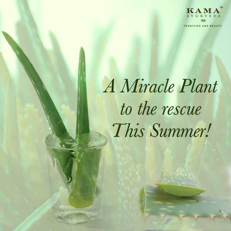 Natural Aloe Vera Juice Skin Care - Kama Ayurveda