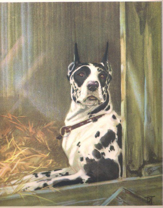 Great Dane Dog Art Vintage Dog Print By Famous Dog Artist Diana