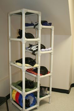 ...Kuranda cat tower...make my own from PVC pipes and material...maybe a side attachment of wide pipe wrapped in rope for scratching