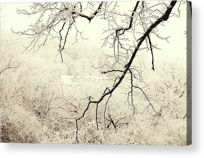 Jenny Rainbow Fine Art Photography Acrylic Print featuring the photograph Tree Branch. Gentle Winter by Jenny Rainbow