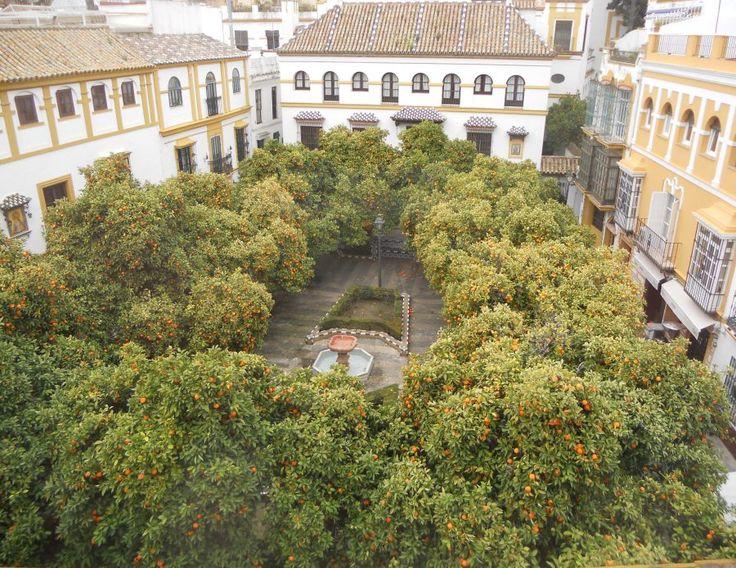 Orange trees in Plaza de Doña Elvira in Seville, Spain