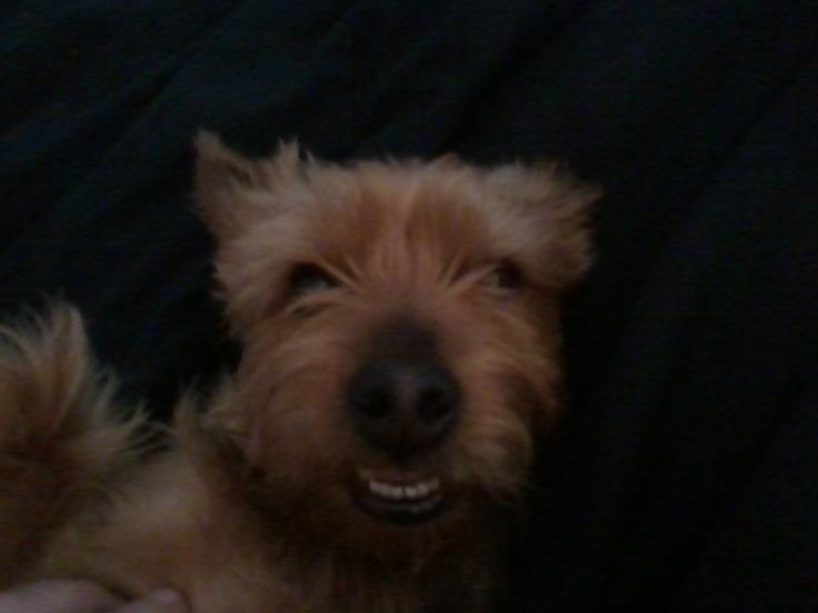 My favorite pup, Wilson !!  Love him