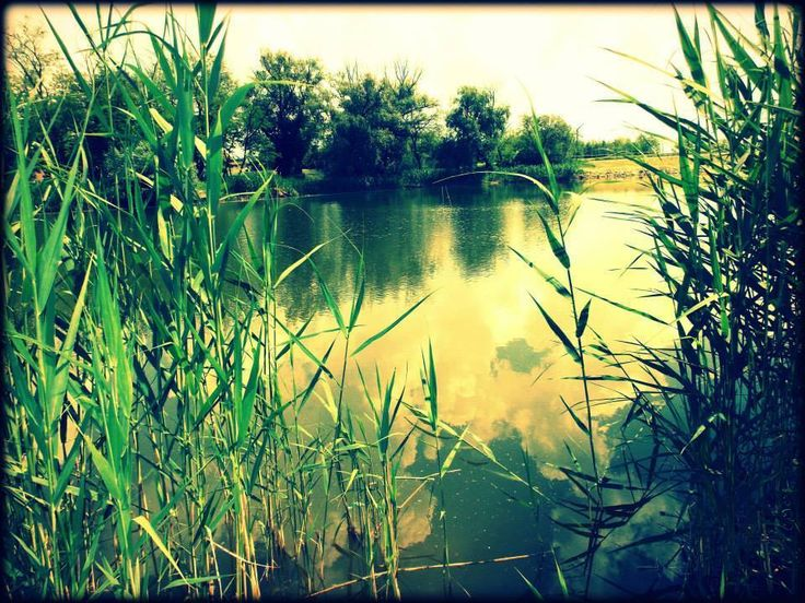 lake, water,