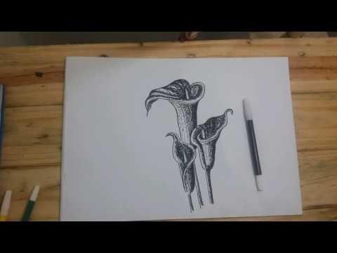 Cara Menggambar Bunga Lily Dengan Spidol Youtube Menggambar Bunga Cara Menggambar Gambar
