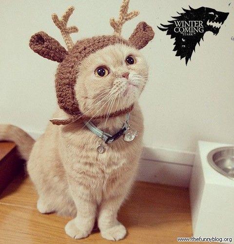 Cat Cat In The Hat Games