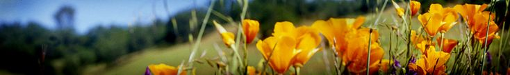 Sonoma County Master Gardeners website with articles on gardening of all types for Northern California