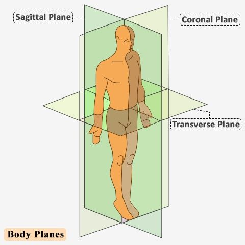 25 Best Ideas About Sagittal Plane On Pinterest General