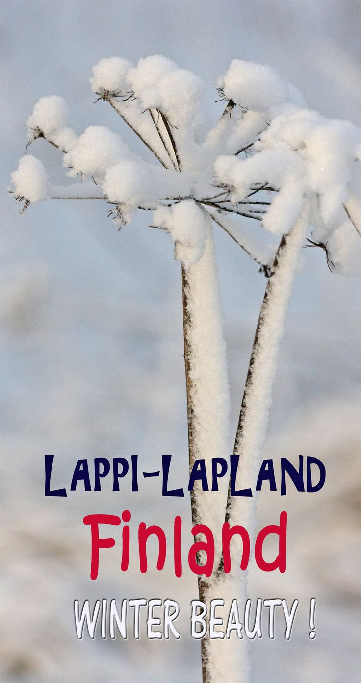 Winter beauty by Aili Alaiso, Finland