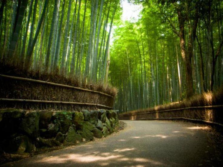 Bosques de Bambu en Kyoto (Japón): Esta belleza natural, ubicado a los pies del monte Arashiyama (un distrito en las afueras de Kioto), es uno de los rincones verdes más espectaculares de dicho país, siendo designado como sitio histórico nacional y lugar de gran belleza escénica. Este bosque cuenta con más de 50 variedades de bambú, con algunos ejemplares que superan los 20 metros de altura, atravesado por numerosos senderos, transitables a pie o en bicicleta.