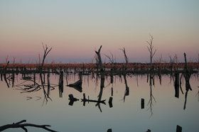 Mirror Image in Lake Mulwala.  Taken facing east with the sun setting in the west hence the rusty looking trees.