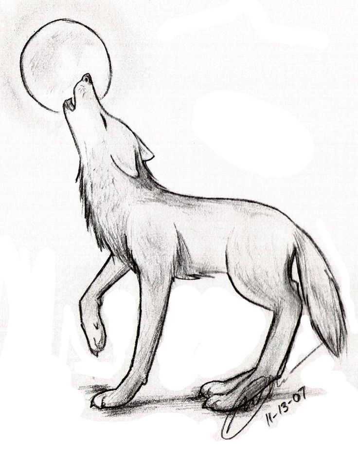 A Drawing Of A Wolf Simple Drawing Of A Wolf Easy Drawings Wolves Pic