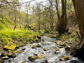 Shipley Glen is one of Bradford's natural jewels.