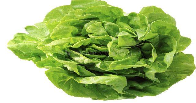 Come coltivare l'insalata di Lattuga. La Lattuga è un'ortaggio comune usato per insalate, di origine incerta ne esistono numerose varietà...