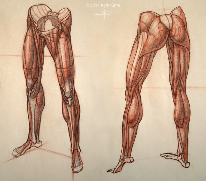 78 Best Drawing References Anatomy The Leg Images On Pinterest