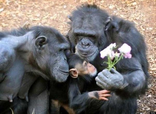family of chimps with flowers