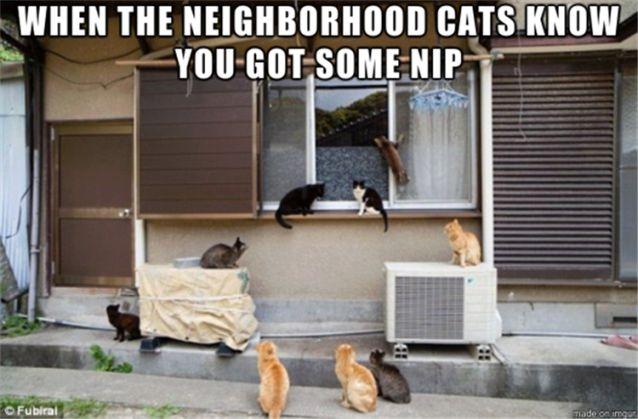 funny-animals-cats