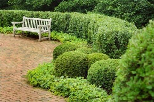 Hvordan velge en hekk for en hage