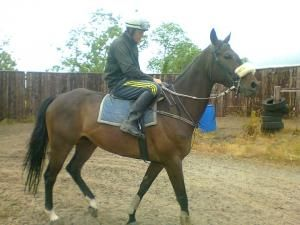 6yo Gelding Related to NH Winners In Training For Sale - Click For More