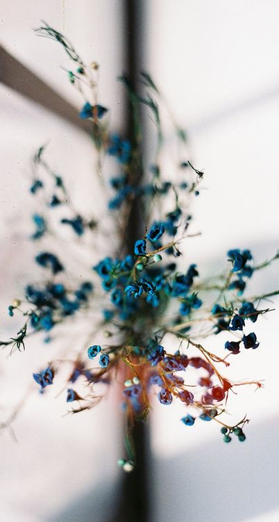 crisp winter beauty: remembrances of last summer with dried flowers