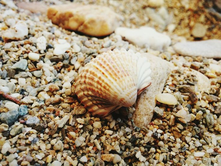 animal shell, shell, nature, seashell, close-up, pebble, snail, day, natural pattern, beauty in nature, outdoors, ground, no people, focus on foreground, selective focus, tranquility