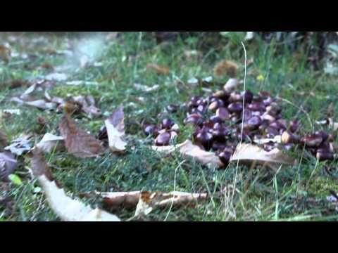 montagnaverde a geo - YouTube
