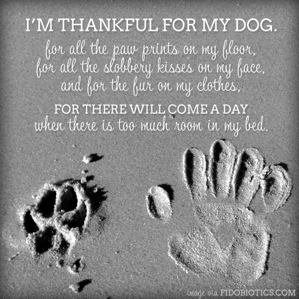 My Dog Loves Me Quotes: I'm Thankful For My Dog