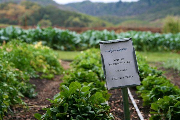 Vegetable Garden, French Laundry, Yountville, California