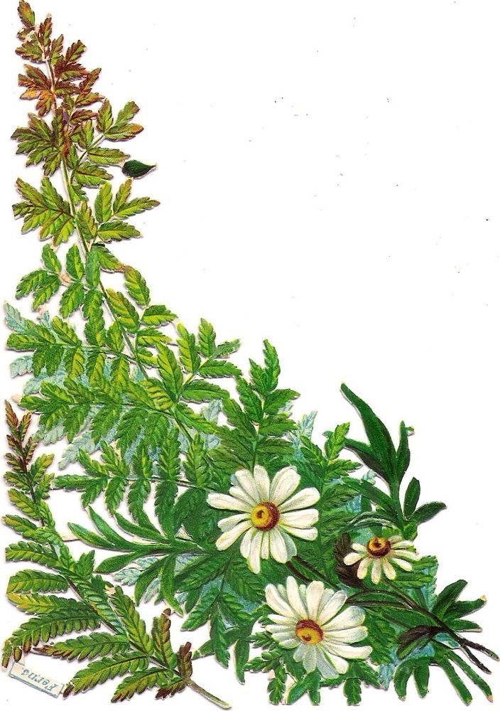 Oblaten Glanzbild scrap die cut chromo  Margerite  18cm  Farn fern Blume flower